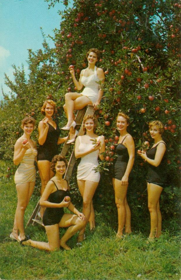 apple festival beauties